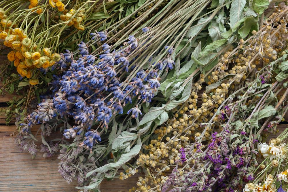 Herbs That Heal the Body